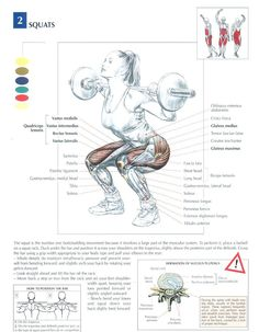 Squats ♦ #health #fitness #exercises #diagrams #body #muscles #gym #bodybuilding…