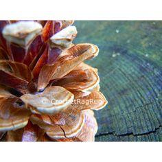 Fotografia digitale su tela, fotografia digitale, autunno, fotografia... ($11) ❤ liked on Polyvore featuring home, home decor, wall art and tela beauty organics