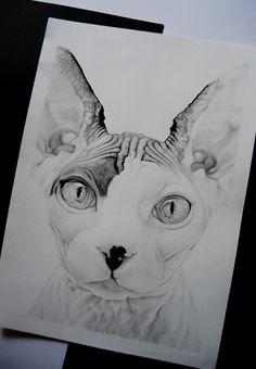 Sphynx Cat on Behance More