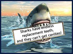 Social media post for dentists: Shark Teeth!
