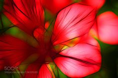 Artistic Flowers by yasminasaoudi. @go4fotos