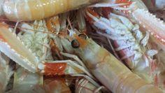 #Scampi #fishmarket #stroll #Portoercole #Argentario #Tuscany #Italy