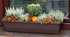Garden Deco, Balcony Garden, Container Plants, Container Gardening, Green Windows, Fall Planters, Christmas Porch, Hello Autumn, Thanksgiving Decorations