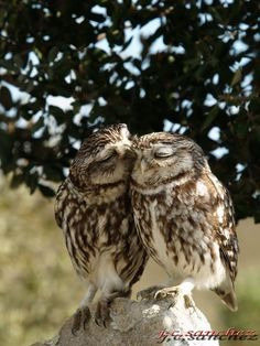 the only thing better than an owl, is an owl in love