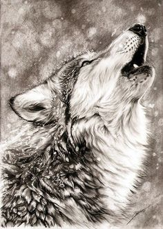 Realistic Animal Pencil Drawings (7)