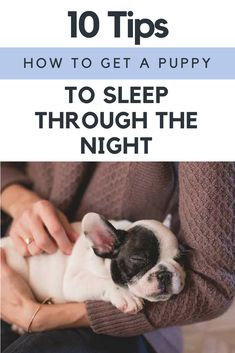 Mesmerizing Training Your Dog Proven, Useful Hints And Tips Ideas. Remarkable Training Your Dog Proven, Useful Hints And Tips Ideas. Puppy Training Tips, Best Dog Training, Crate Training, Potty Training, Kennel Training A Puppy, Toilet Training, Blue Merle, Dog Minding, Sleeping Puppies