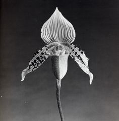 mapplethorpe photography | Queers in History
