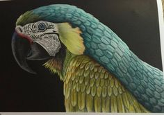 Macaw 1 by Gloria Hurd Lowell