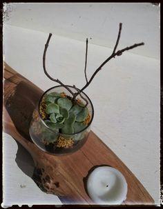 Mini jardín en tronco portavelas