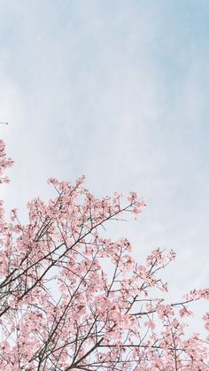 A cherry blossom wallpaper you can use to brighten up your phone. Frühling Wallpaper, Flower Iphone Wallpaper, Spring Wallpaper, Cute Wallpaper For Phone, Tumblr Wallpaper, Flower Backgrounds, Iphone Backgrounds, Cherry Blossom Wallpaper, Cherry Blossom Background