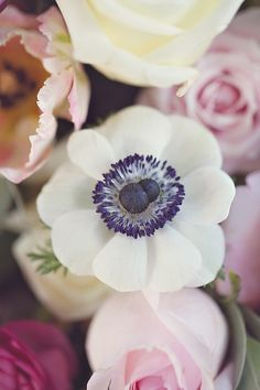 This navy and white anemone would be a beautiful flower for a nautical bouquet Anemone Flower, My Flower, White Anemone, Flower Ideas, Deco Floral, Mother Nature, Planting Flowers, Flowers Garden, Beautiful Flowers
