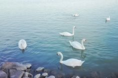 Bird, Pictures, Photos, Birds, Photo Illustration, Resim, Birdwatching, Clip Art