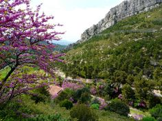Admiring the beauty of spring in Gemenos, France.    wunderground.com