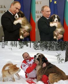 The dog whisperer. Funny Animal Pictures, Best Funny Pictures, Funny Animals, Cute Animals, Funny Dog Memes, Funny Cats And Dogs, St Bernard Puppy, Amor Animal, Huge Dogs