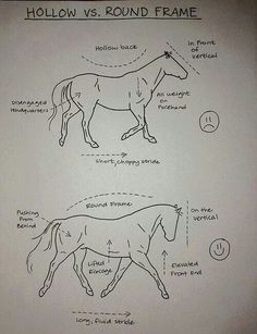 Very helpful for me and my mare!