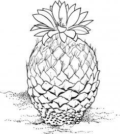 Drawing cactus Encephalocarpus Strobiliformis or Pinecone Cactus
