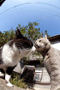 猫に逢いに行こう - [にゃんこ島]縄張り(3)