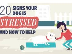 20 Signs of Stress in Dogs [Infographic] Dog Grooming Salons, Dog Grooming Business, Puppy Food Homemade, Fruit Dogs Can Eat, Top 10 Dog Foods, Kill Fleas On Dogs, Home Remedies For Fleas, Miniature American Shepherd, Dogs