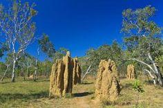 tripbucket   Dream: Explore Kakadu National Park, Northern Territory, Australia (UNESCO site)