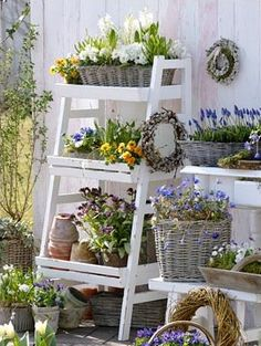 Baskets of blooms for Spring.  The blue grape hyacinths are fragrant and sweet little bulbs to grow.