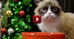 Relax and Enjoy This Silly Christmas Video With Your Favorite Famous Kitties - LOL