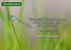 """#Sweetdreams: """"Compassion brings us to a stop, and for a moment we rise above ourselves."""" ~ Mason Cooley  ~OaksSeniorLiving.com #quotes #caring #elderly #seniors #compassion Rise Above, Senior Living, Sweet Dreams, Compassion, Atlanta, Bring It On, In This Moment, Quotes, Quotations"""