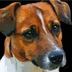 Funky Jack Russell Square Print