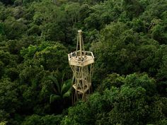 Panama Rainforest Discovery Center - near Gamboa, Panama;  designed by Patrick Dillon and funded by the Eugene Eisenmann Avifauna Foundation;  the tower is 105 feet tall, high enough to reach the forest canopy;  photo by Silvia Grünhut for the Eugene Eisenmann Avifauna Foundation