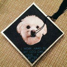 Cool Graduation Cap Black Adorable Dog - f226f7af7ab408c767a5d63c2b0184f9--grad-cap-graduation-caps  HD_304998  .jpg