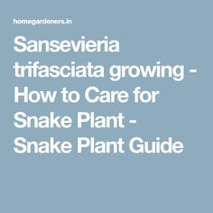 Sansevieria trifasciata growing - How to Care for Snake Plant - Snake Plant Guide