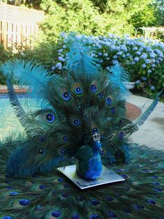 Peacock Wedding Centerpieces   His Royal Majesty peacock wedding decoration in your choice of colors