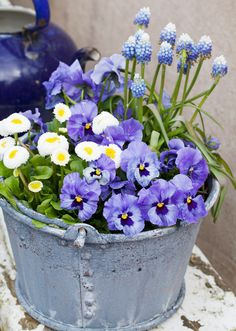 When the pansies turn up it is a sure spring sign.When the pansies turn up it is a sure spring sign. You can delete flowers Source by GartenDinge. Container Flowers, Container Plants, Container Gardening, Gardening Vegetables, Shade Perennials, Shade Plants, Deco Floral, Spring Sign, Flower Pots