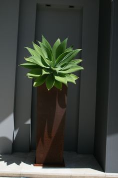 Connell's Point Garden by My Verandah - Agave in Corton planter