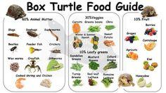 Russian Tortoise Diet Guide / Helpful Tips And Tricks Tortoise Food, Tortoise Habitat, Sulcata Tortoise, Tortoise Turtle, Tortoise House, Baby Tortoise, Box Turtle Habitat, Turtle Diet, Tips
