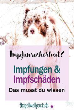 Warum sollten wir überhaupt impfen und welche Impfschäden können auftreten?   Impfung   Impfschaden   Hund   thepellmellpack.de