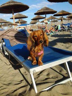Sissi al Doggy Village dell'African Beach!