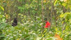 গভীর শালবনের অন্ধকারে এসব কি হচ্ছে । Bangabandhu Sheikh Mujib Safari Park Safari, Activities, Bird, Youtube, Plants, Birds, Plant, Youtubers, Youtube Movies