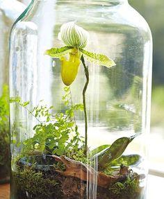 UN JARDIN D'INTÉRIEUR - C'est un véritable écosystème miniature qui apportera une touche fraiche, nature et originale à votre déco.