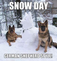Gsds's style  #gsd #germanshepherds #memes