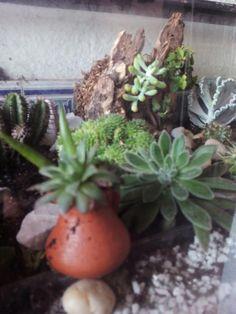 plantação em aquário