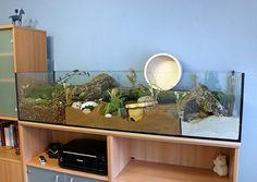 [Аквариум] 167x50x40 аквариум с натуральными средствами для Тео - Страница 4 - корпус презентации - www.das-hamsterforum.de