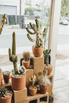 cactus-store-la-5