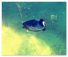 No lago