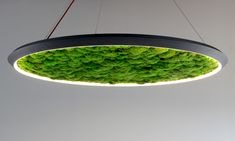 Find out all of the information about the Sattler GmbH product: pendant lamp / contemporary / aluminum / acrylic glass LUCE VERDE SLIM. Plant Lighting, Linear Lighting, Luminaire Design, Lamp Design, Room Lights, Hanging Lights, Moss Decor, Moss Wall, Interior Garden