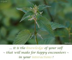 ... it is the #knowledge of your self ~ that will make for happy encounters ~ in your #interactions ! ( #Samara )