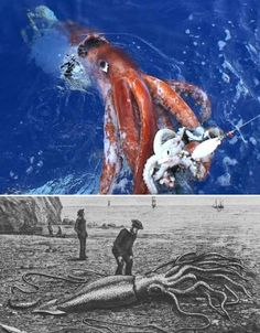 Real Sea Monsters: 4 Ocean Creatures with Scary Looks - WebEcoist Underwater Animals, Underwater Creatures, Underwater Life, Real Sea Monsters, Ocean Monsters, 4 Oceans, Giant Squid, Weird Fish, Creepy Images