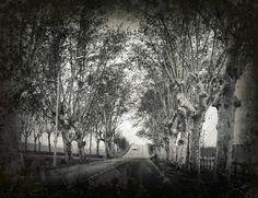 Els camins de la llibertat