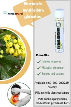Berberis aquifolium (Oregon Grape) is indicated for skin complaints and chronic infections with inflammation of mucous membranes. Improves complexion and also helps in maintaining healthy skin. Homeopathy Medicine, Ayurvedic Medicine, Oregon Grape, Sprain, Homeopathic Remedies, Glass Containers, Active Ingredient, Pills, Healthy Skin