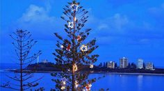 Sunshine Coast Christmas trees shine!!!