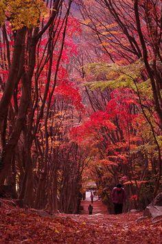 Fall in Kawachi Fuji Garden, Kitakyushu, Fukuoka, Japan